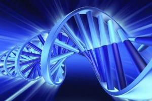 hromozomi-dnk-(6)_620x0