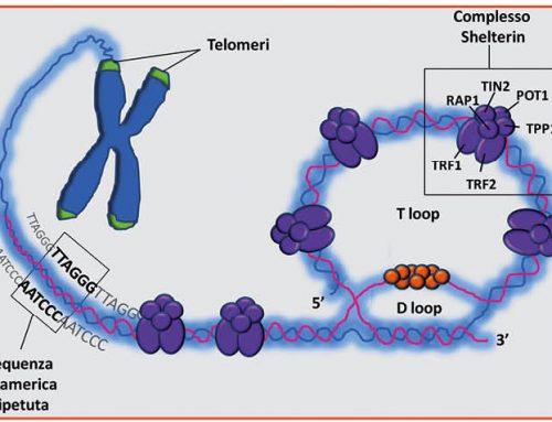 JOŠ JEDAN NAUČNI DOKAZ DA SE STARENJE MOŽE USPORITI: Produženje telomera menja smer starenja u ljudskim ćelijama